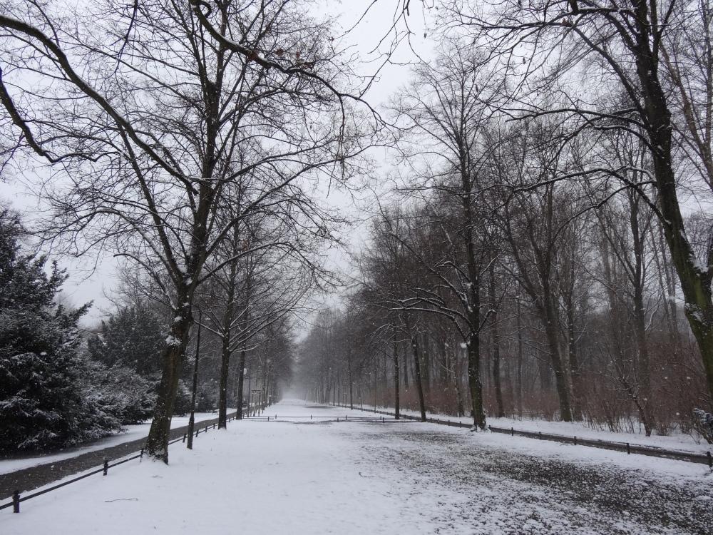 Tiergarten, Feb 20, 2013.