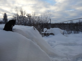 Stig's dog greeted us every morning just outside our window.