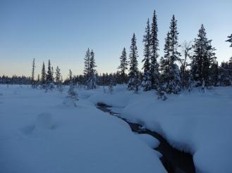 Stream in the wilderness