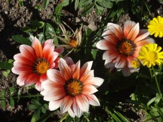 Hofgarten is blooming in June