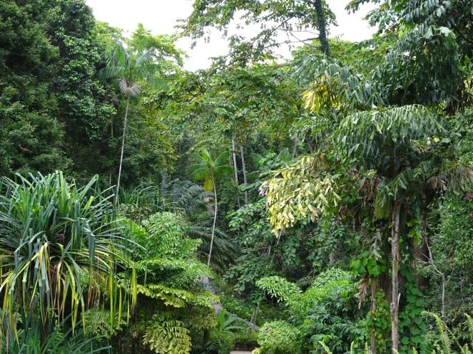 Rainforest inside The Datai Langkawi