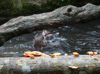 Playful otters and cool mushrooms!